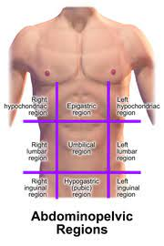 Abdominal quadrants and organs the right upper quadrant, or the ruq, contains very significant organs, or at least, portions of them. Quadrants And Regions Of Abdomen Wikipedia