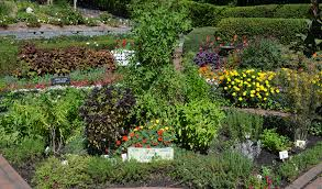 Small Picture What You Need to Know About Culinary Herb Garden Design