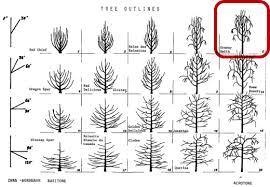 Wa 38 Characteristics And Horticulture Wsu Tree Fruit