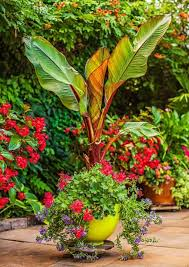 Small Picture 1332 best container garden images on Pinterest Plants Flower