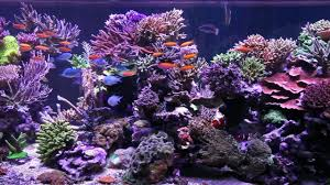 Fish Tank Peters Fish Tank Episode 1 1350 Gallon Tank Overview Youtube