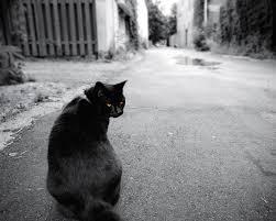 Image result for superstition black cat