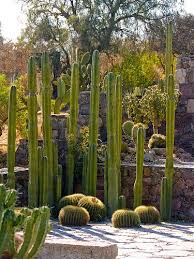 Small Picture 159 best cactus gardens images on Pinterest Landscaping Cacti