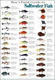 Saltwater Fish Chart Saltwater Fish Fish Saltwater Fishing Fish Chart