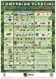 Plant Compatibility Vegetable Gardens Chart Beginners Companion Planting Resources For Gardening