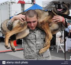 u s air force staff sgt carey tignor a military working dog stock photo u s air force staff sgt carey tignor a military working dog handler the 87th security forces squadron from joint base