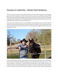 Causes Of Laminitis Horse Hoof Anatomy