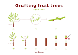 Grafting Fruit Trees  The Tree Center™How To Graft Fruit Trees With Pictures
