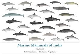 Identification Guide Marine Mammal