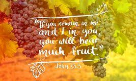 Image result for pictures of verses on bearing fruit
