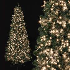 Warm Led Tree Lights Warm Lights Christmas Tree Pogot Bietthunghiduong Co