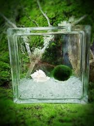 Decorating With Moss Balls Kids Square Plastic Bottle Terrarium with Moss Ball Pet Nano 83