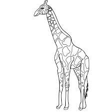 Small Picture Giraffe NetArt
