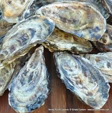 Oyster Grading Chart Oyster Species Uk Information Simply Oysters