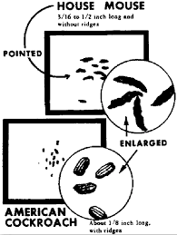 Pest Dropping Identification Chart Pest Poop 101 Pest Cemetery