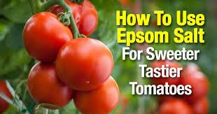 epsom salt gardening. Epsom Salt Gardening I