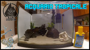 Come allestire un acquario tropicale tutorial: [zoo skin] youtube