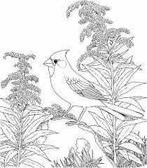 Small Picture Coloring Pages Wildlife Coloring Pages Detailed Coloring Pages