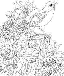 Small Picture 156 best Birds Coloring page images on Pinterest Drawings