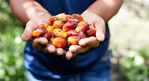 palm oil rises as demand grows in