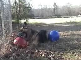 Jolly Ball Indestructable Dog Balls