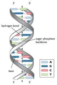 Life Sciences Cyberbridge