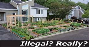 florida vegetable gardening. Sustainable Living Gets Harder All The Time When States Insist On Fining, Harassing, And Destroying Home Land Owner\u0027s Property. Florida Vegetable Gardening G