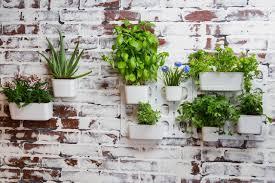 indoor vertical garden. Amazon.com: Vertibloom Living Wall Garden Starter Kit - Modular Indoor Vertical Planter System: \u0026 Outdoor