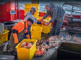 Tasmanian King Crab Being Unloaded ...