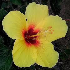 hawaii s