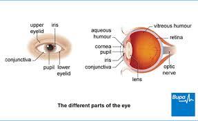 Doctors Note For Pink Eye Conjunctivitis Health Information Bupa Uk