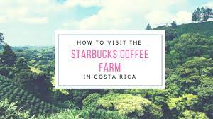 Although costa rica produces around 1% of the world's coffee production, the coffee quality is exceptionally high. How To Visit The Starbucks Coffee Farm The Adventuring Millennial