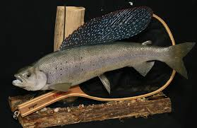northern pike fish replica artic grayling habitat