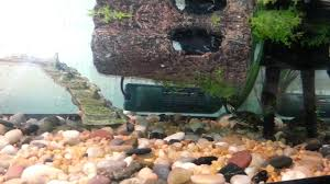 Turtle Tank Decor Painted Turtle Tank Setup Youtube