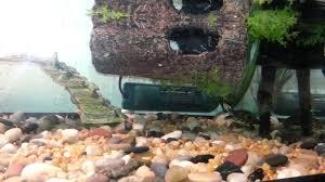 painted turtle tank setup