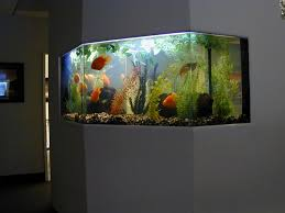 Decorations:Black Home Aquarium Stand Ideas With Cool Interior Lighting  Plus White Sofa Sets Smart