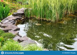Artificial Pond Design The Landscape Design Of An Artificial Pond With Water Stock