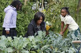 Michelle Obama Kitchen Garden Our Royalty Bangs Arent All Michelle Obama And Kate Middleton