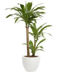 modern office plants. 7 office plants you wonu0027t kill modern r