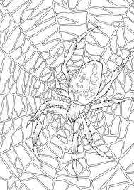 Small Picture Very Large Spider Web Coloring Page Very Large Spider Web