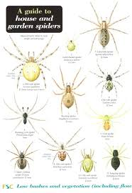 11 South African Spider Identification Chart South African