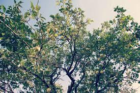 green apple tree clothing. green apple tree clothing