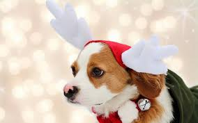 cute animal christmas backgrounds. Unique Animal Christmas Puppy Wallpaper High Quality Resolution With Cute Animal Backgrounds Pinterest