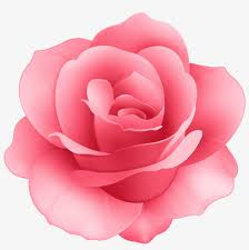 free png rose flower png