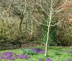 Edible Garden Ideas Espaliered Fruit Trees  TendedUnderplanting Fruit Trees