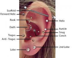 Piercing Chart Ear Piercing Diagram Books Of Wiring Diagram Body