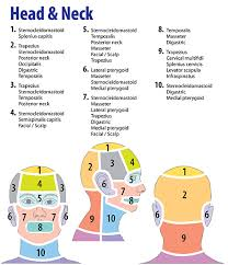 Headaches And Associated Muscles Trigger Points Trigger