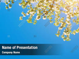Spring Powerpoint Apple Sunny Spring Powerpoint Template Apple Sunny Spring