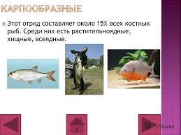 Презентация на тему По биологии на тему рыбы ученика в класса  14 Этот отряд составляет около 15% всех костных рыб Среди них есть растительноядные хищные всеядные