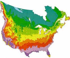 Hardiness Zone Chart Fernlea Flowers Ltd Hardiness Zone Map